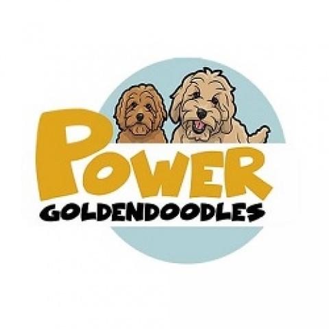 Power Goldendoodles