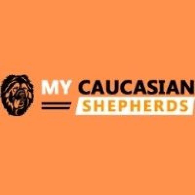 Caucasian shepherds picture