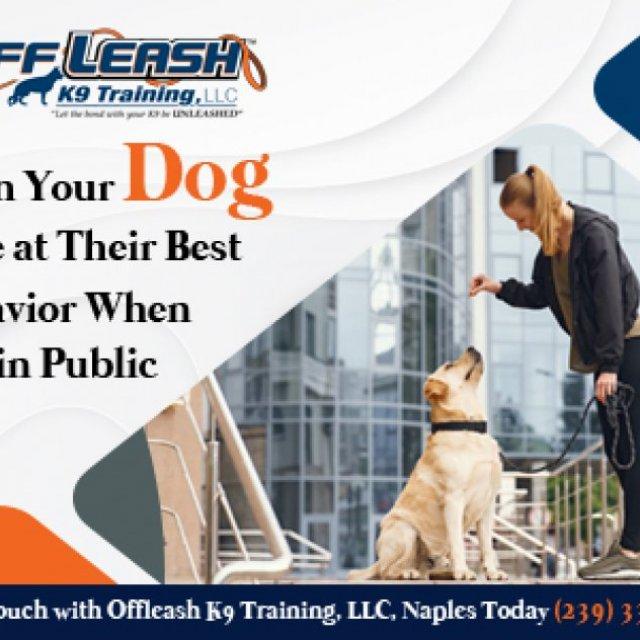 Fort Myers Dog Training