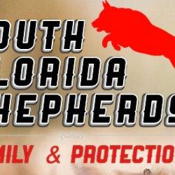 South Florida Shepherds